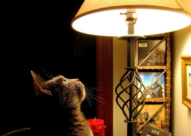 """Симоронский ритуал """"Да будет свет!"""""""